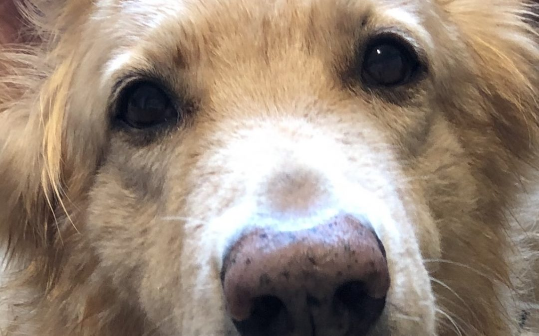 What is so special about a dog's nose?
